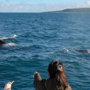 tourists whale watching