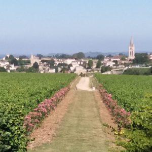 saint-emilion landscape