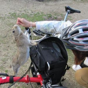person feeding rabbit on top of red bicycle in Rabbit Island, Okunoshima