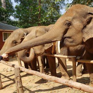 elephants tour in thailand