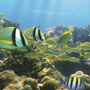 snorkeling waikiki