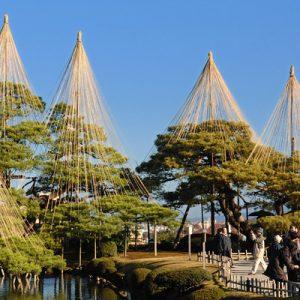 golden trees in kanazawa