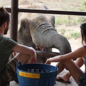 Elephant Day Care at ElephantsWorld in Kanchanaburi