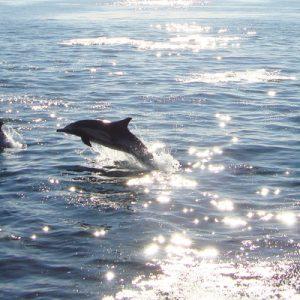 davey's locker whale watching cruise