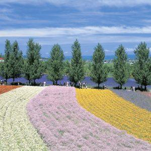 farm tomita colorfield garden fields
