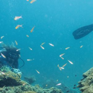 PADI Diving Courses in Koh Phi Phi
