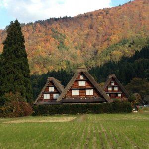 three gassho-zukuri farmhouses in Ogimachi Village during autumn