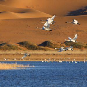 tengger swan lake
