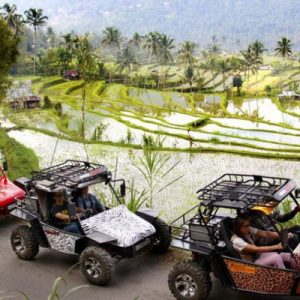 atv ride along the rice fields