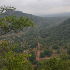 view of Rangaswamy Betta from the top