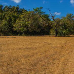 Jeep Safari To Bakkare Elephant Grasslands