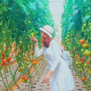 tomato field da lat
