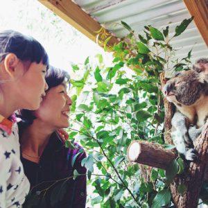 悉尼动物园