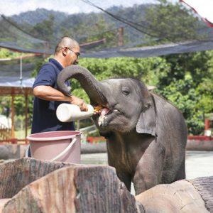 瓜拉甘达大象保育中心