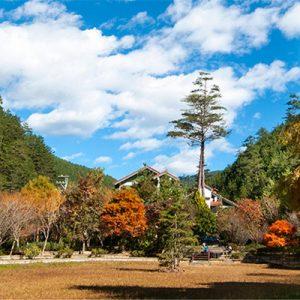 漫游东势林场与心之芳庭