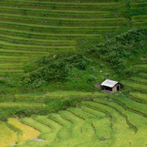 Lao Chai和Ta Van村庄步行之旅(沙坝出发)