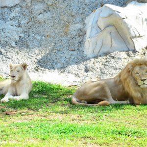 甘孟山城野生动物园