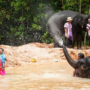 大象向游客喷水