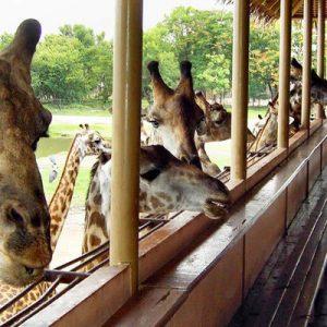 泰国曼谷赛佛瑞野生动物园(Safari World)