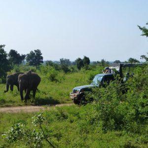 斯里兰卡 乌达瓦拉维Udawalawe国家公园狩猎之旅