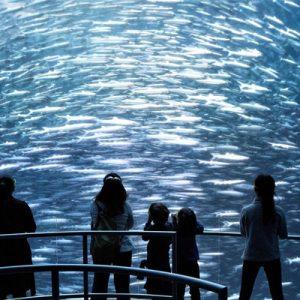 纽约国家地理体验馆:海洋奇幻展