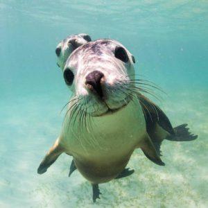 朱里恩湾海狮之旅(可选浮潜)