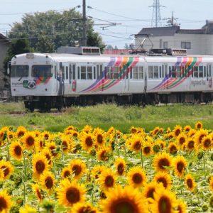 上高地线观光列车,松本交通,新岛岛交通