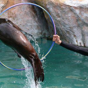 马尼拉海洋公园互动体验(美人鱼变装