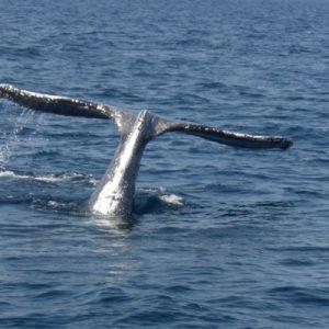 冲绳冬日赏鲸之旅