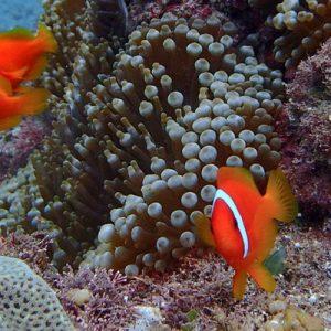 兰屿岸潜 fun diving