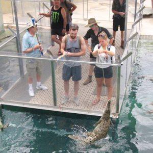 达尔文巨鳄喂食体验