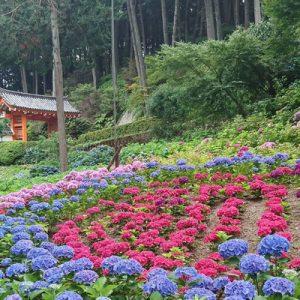 京都寺庙一日游,京都寺庙,京都平等院
