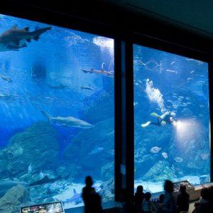 福冈海之中道海滨公园,福冈海洋世界水族馆一日游(普通话导游/ 含午餐)