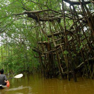 红树林皮划艇巡游