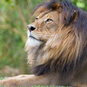 狮子360体验