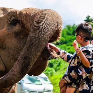 美旺大象营半日游