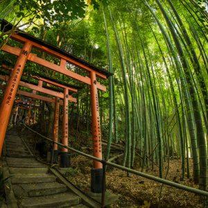 大阪、京都、奈良一日游
