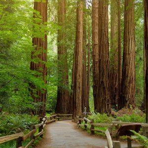 缪尔红木森林国家公园