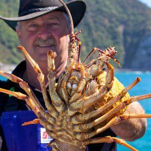 凯库拉捞龙虾体验