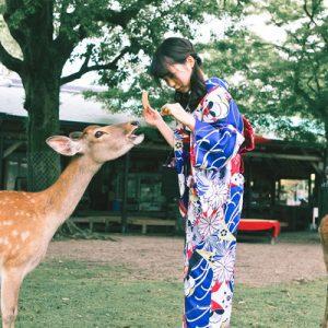 【含京都至奈良单程接载】奈良亲亲小鹿 和服体验