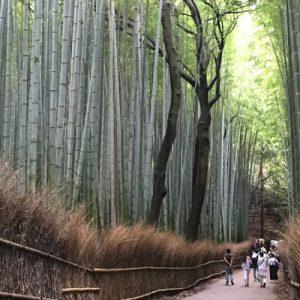 京都岚山经典半日游