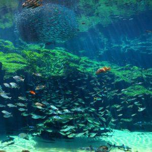 九十九岛水族馆