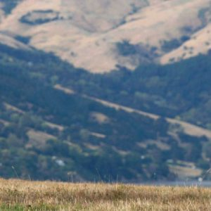 莎玛拉羊驼牧场羊驼