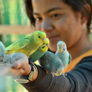 菲律宾大雅台市zoori动物园