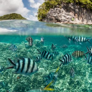 蓝色珊瑚礁天堂 忘忧岛一日