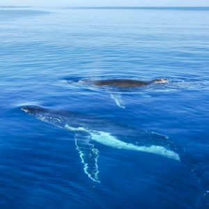 费沙岛赏鲸半日游