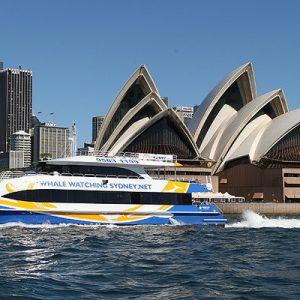 雪梨赏鲸之旅