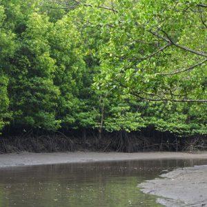 红树林河上巡游