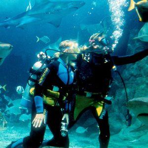 墨尔本水族馆「与鲨鱼共潜」体验