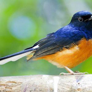 Bondla自然保护区清晨观鸟